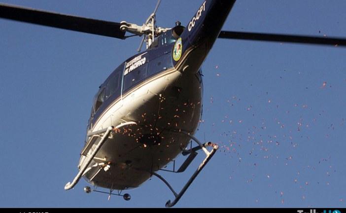 Inédito en Chile: siembra aérea de araucarias realizó CONAF en la Reserva China Muerta